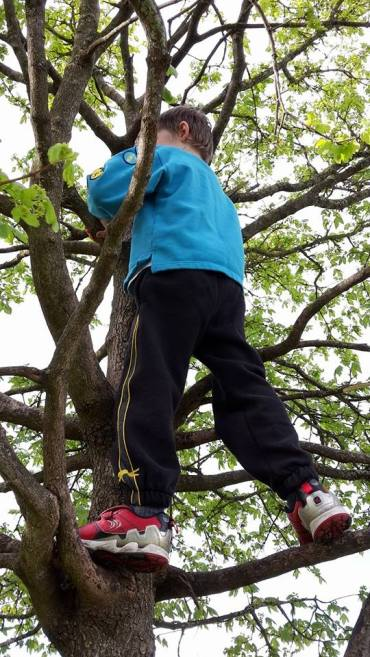Tree Climbing 20th Worcester Beavers